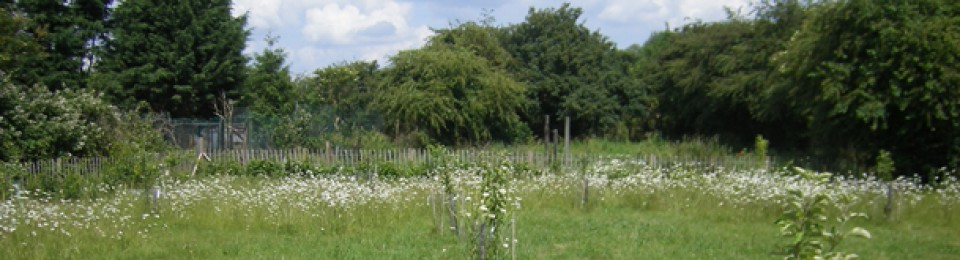 Trumpington Community Orchard