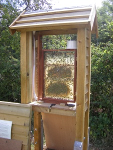 Bees in our observation bee hive