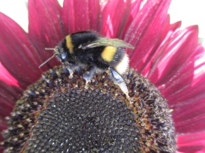big bumble close