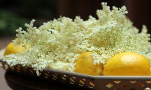 Elderflowers4
