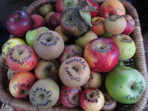 Ely apple day