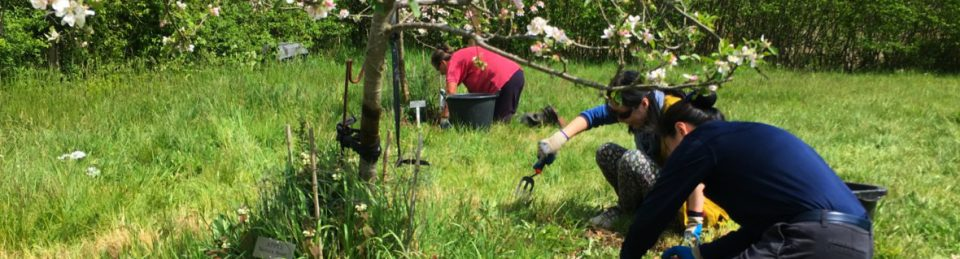 Trumpington Community Orchard